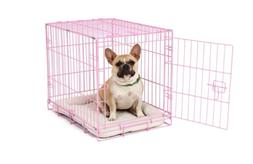 Carlson Pink Secure and Compact Single Door Metal Dog Crate,